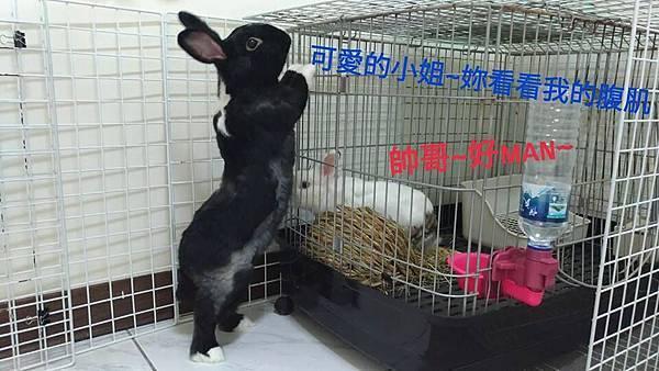 一半(白棕)、中興醬(42).jpg