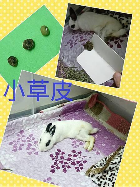 小草皮(23).jpg
