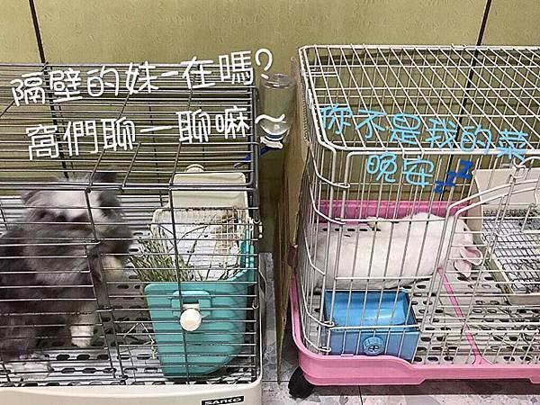 小獅妹(53).jpg
