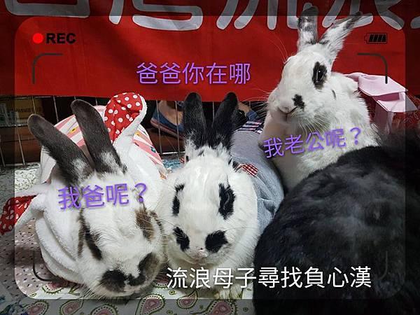 黃喜 中四喜 右來喜(32).jpg