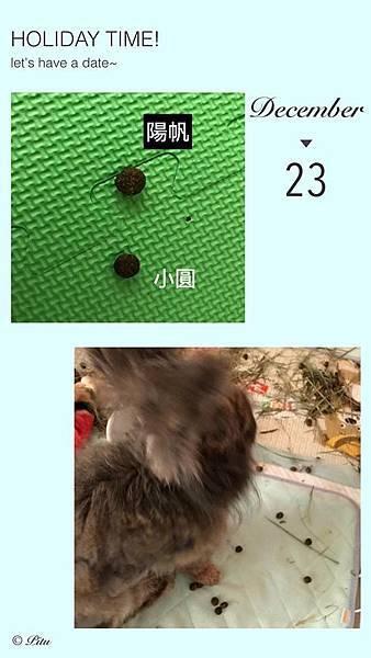 陽帆(5).jpg