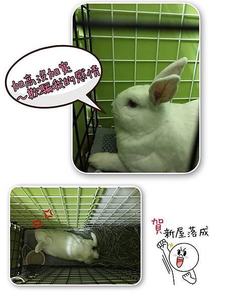 小妮子(28).jpg