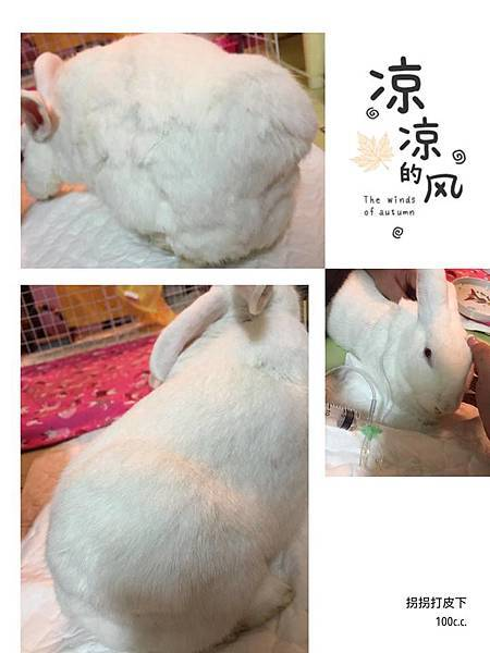 魏拐拐(阿莓)(32).jpg
