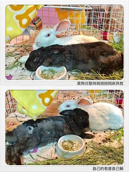 魏拐拐(阿莓)、黑狗兄(37).jpg