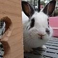 兔醬(49).jpg