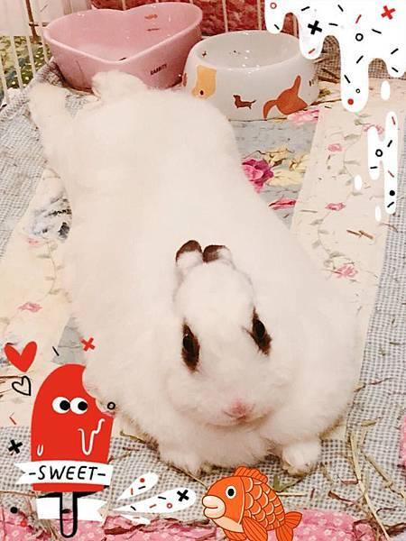 豬仔球(鬼宿)(34).jpg