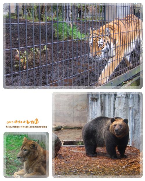 旭山動物園猛獸