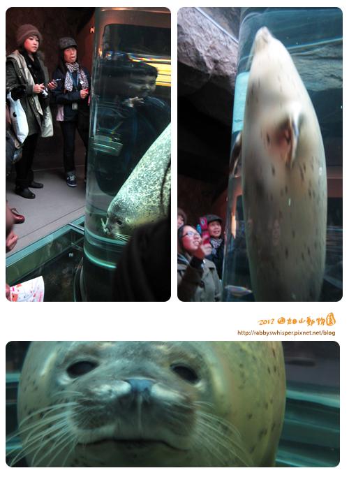 旭山動物園海豹
