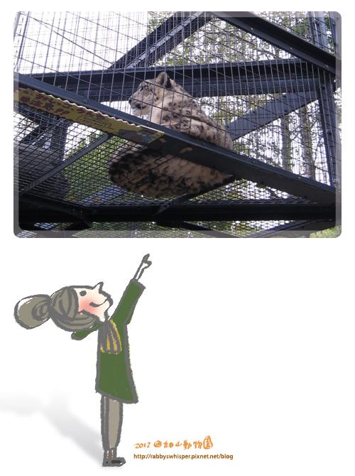 旭山動物園雪豹