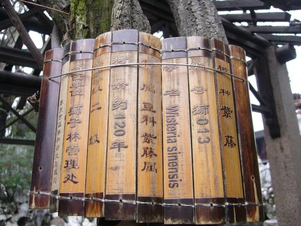 樹的身分證