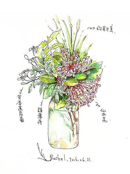 仙丹花(女巫花草旅繪5).jpg