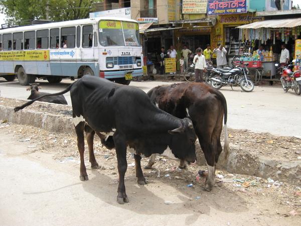 2009 印度旅遊 160.jpg