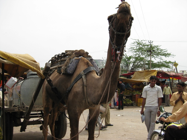2009 印度旅遊 161.jpg