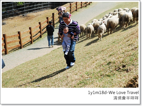 整個山頭,只有這二父子跟在羊群後狂追