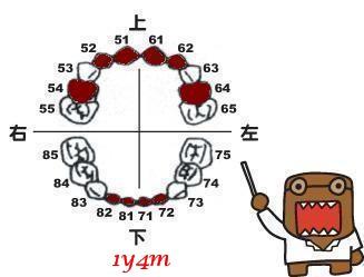 1y4m-小白54、64