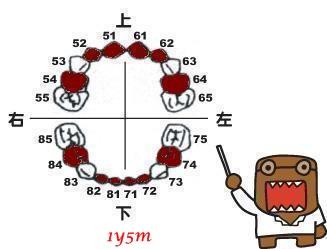 1y5m-小白84、74