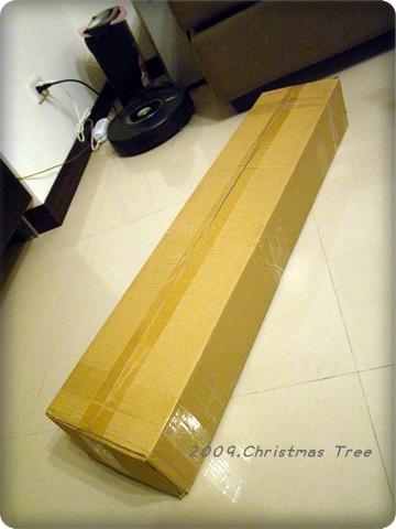 家裡的頭一棵樹
