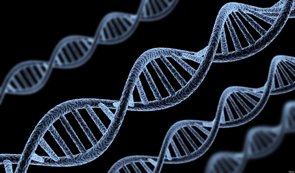 o-HUMAN-GENE-SUPREME-COURT-facebook