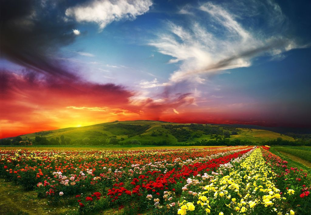 beautiful-landscape-scenery-rose-valley-countryside-nature-horizon-the-valley-roses-nature