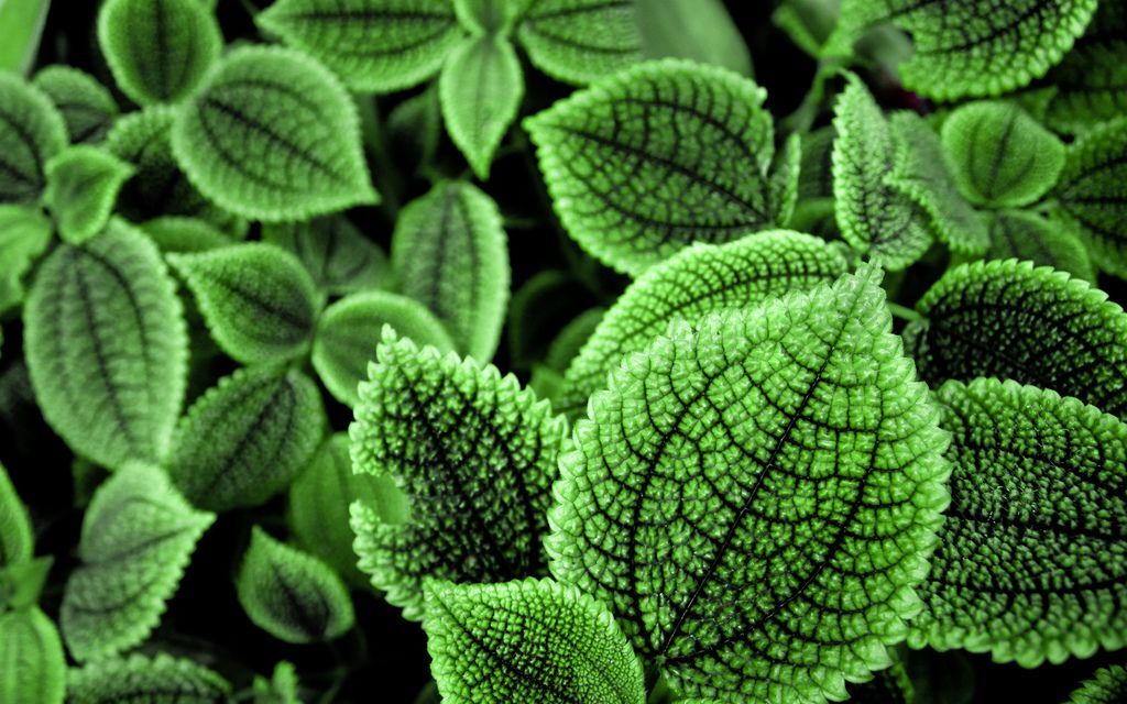 Nature_Plants_green_leaves_plant_030328_