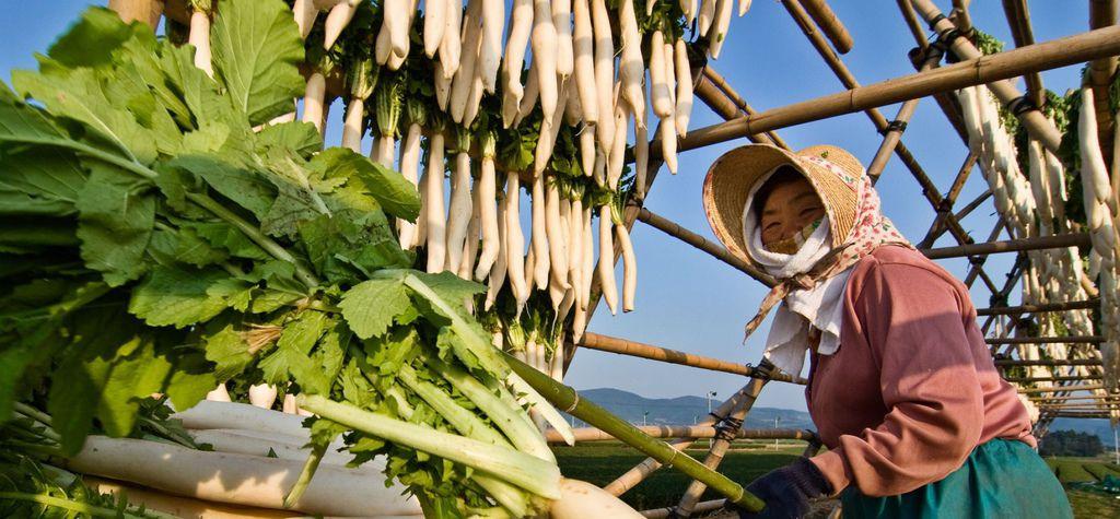 farmer-pano_27050