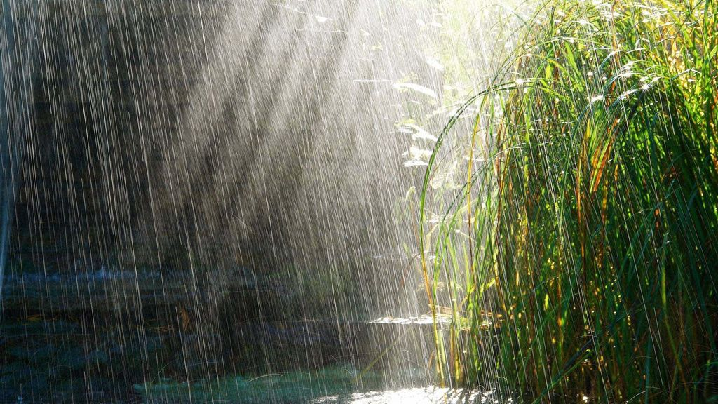 tumblr_static_rain_and_shrub