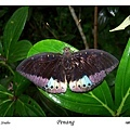 45. Penang Butterfly Farm