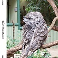 37. Featherdale Wildlife Park
