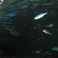 7.08.2007 Auckland 25 Kelly Tarlton's Underwater World.JPG