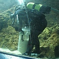 7.08.2007 Auckland 33 Kelly Tarlton's Underwater World.jpg