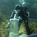 7.08.2007 Auckland 35 Kelly Tarlton's Underwater World.jpg
