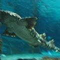 7.08.2007 Auckland 37 Kelly Tarlton's Underwater World.JPG