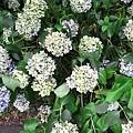 29Jul08 East Imperial Garden 07.jpg