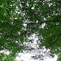 29Jul08 East Imperial Garden 09.jpg