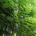 29Jul08 East Imperial Garden 10.jpg