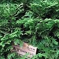 29Jul08 East Imperial Garden 11.jpg