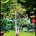 29 Foshan Liang's Garden.jpg