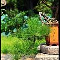 30 Foshan Liang's Garden.jpg
