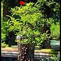 32 Foshan Liang's Garden.jpg