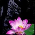 49 Foshan Liang's Garden.jpg