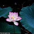 50 Foshan Liang's Garden.jpg