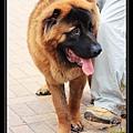 Sai Kung Cute Dog 01.jpg