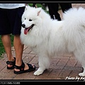 Sai Kung Cute Dog 02.jpg