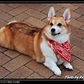 Sai Kung Cute Dog 03.jpg