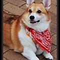 Sai Kung Cute Dog 04.jpg