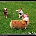 Sai Kung Cute Dog 05.jpg
