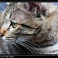 cute cat 01.jpg