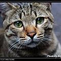cute cat 02.jpg