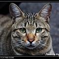 cute cat 03.jpg