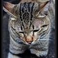 cute cat 04.jpg